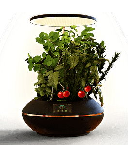 table top hydroponics gardening system