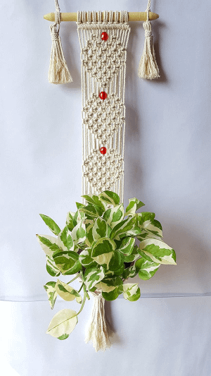 hanging planter with a plant