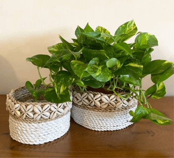 white shell & natural jute planters