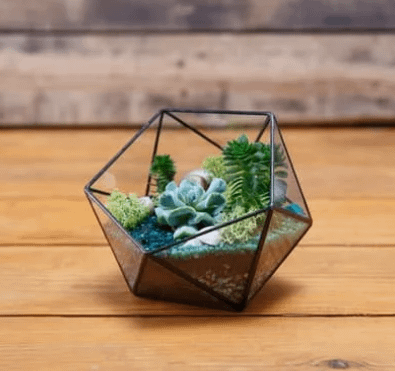 terrarium arranged in a polygonal glass planter showing the results of terrarium gardening