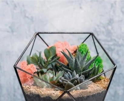 a terrarium garden aesthetically arranged in a polygonal glass planter