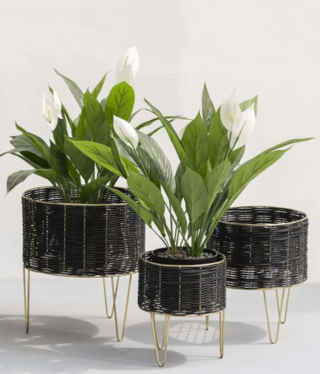 3 black cane natural planters arranged for a bohemian look