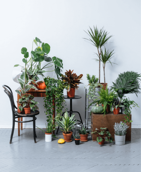 indoor plants arranged to achieve a cozy cottagecore look
