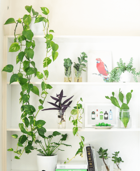 indoor plants arranged on a book shelf to give a farmcore look