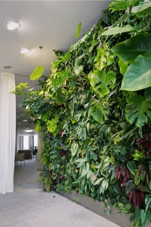 an example of vertical gardening or green wall in the indoor of a house